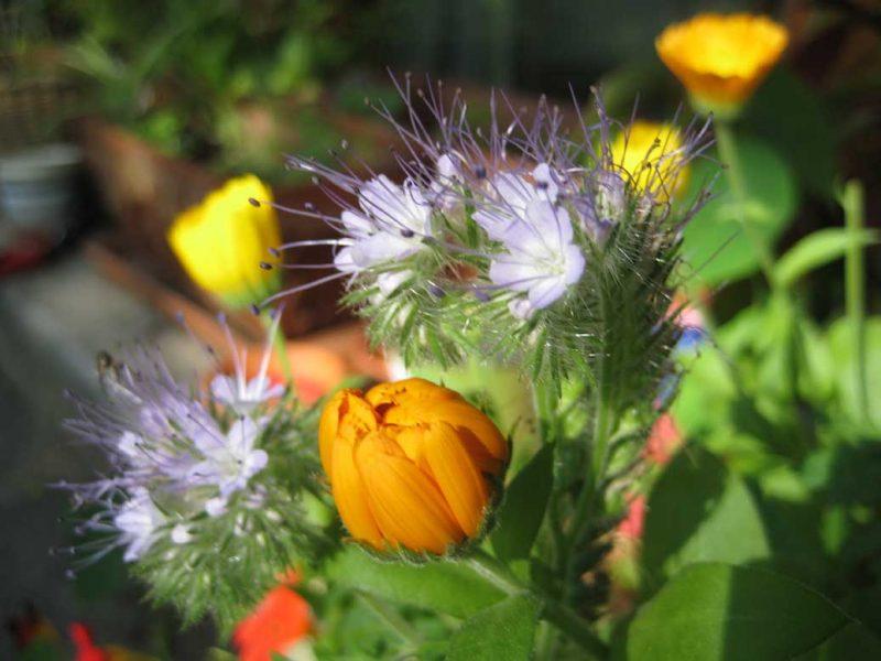Suria Verlag Komm auf meine Gartenbank